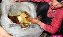 2013 – Trip 2 – Săn Mật Ong Rừng – https://hoabanfood.com/ban-mat-ong-rung
