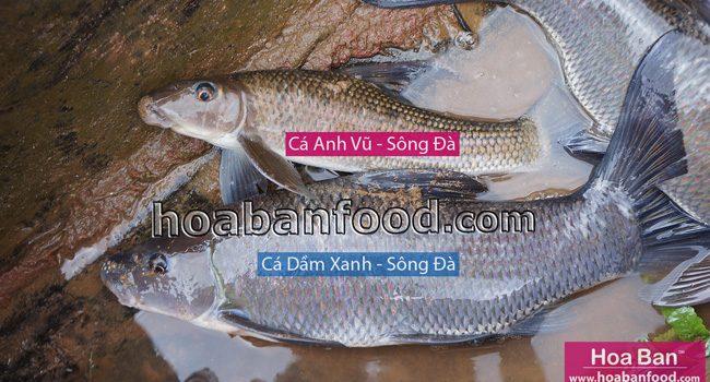 Cá Anh Vũ - Sông Đà - https://hoabanfood.com