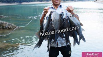 Cá Dầm Xanh Sông Đà - https://hoabanfood.com