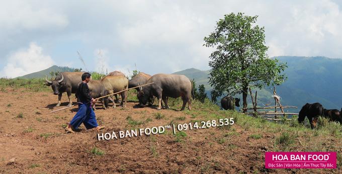 Trau Gac Bep | HOA BAN FOOD