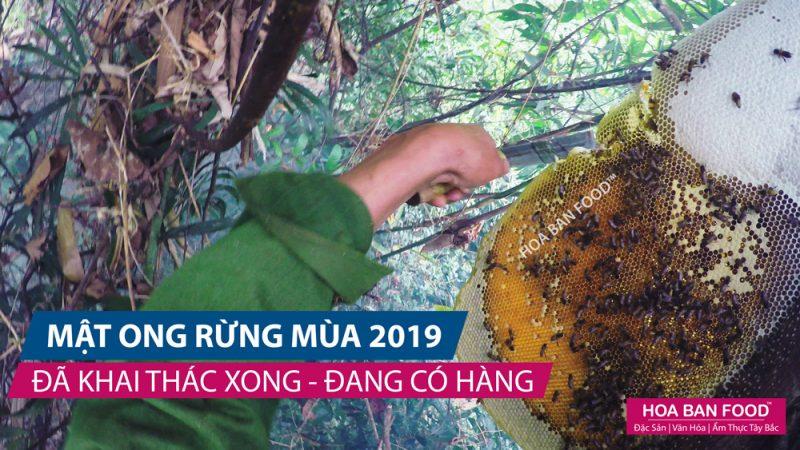 Mật Ong Rừng mùa 2019   HOA BAN FOOD™