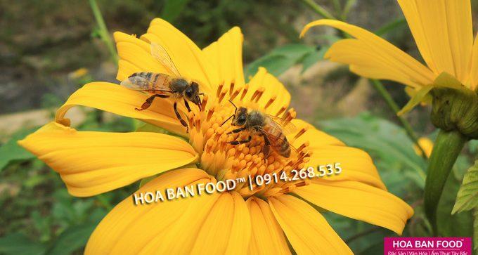 Mật Ong Hoa Cúc Quỳ | HOA BAN FOOD