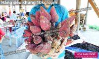 Nam-Ngoc-Cau-Khung-10kg-1