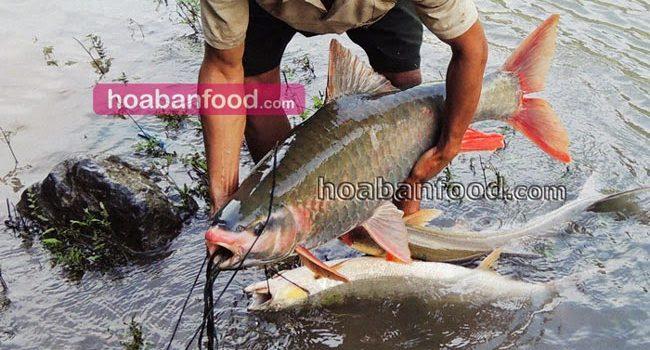 Cá Khủng Sông Đà - https://hoabanfood.com