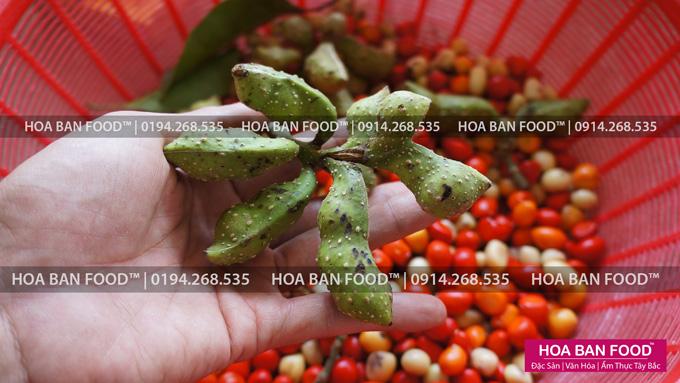 Hạt Dổi Rừng tươi | HOA BAN FOOD™