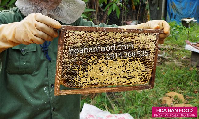 mat-ong-nguyen-chat-(farm)-3