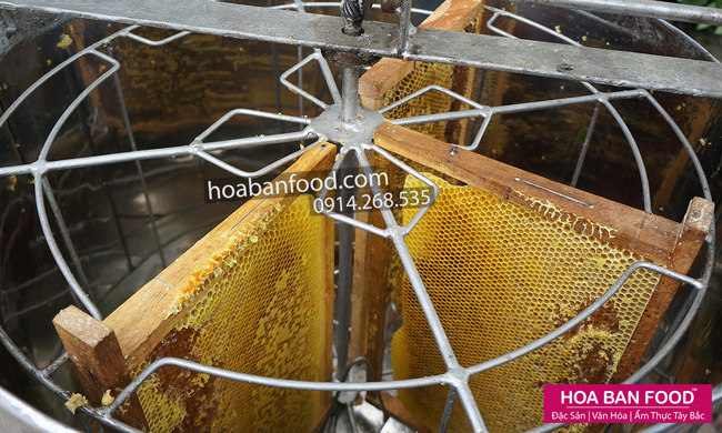 mat-ong-nguyen-chat-(farm)-8