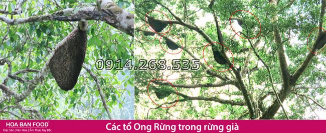 mat-ong-rung-nguyen-chat-1-a-1