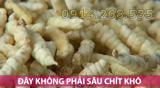 phan-biet-sau-chit-kho-gia-7