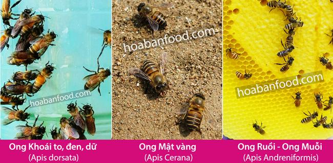So sánh khác biệt giữa Ong Rừng và Ong Nuôi